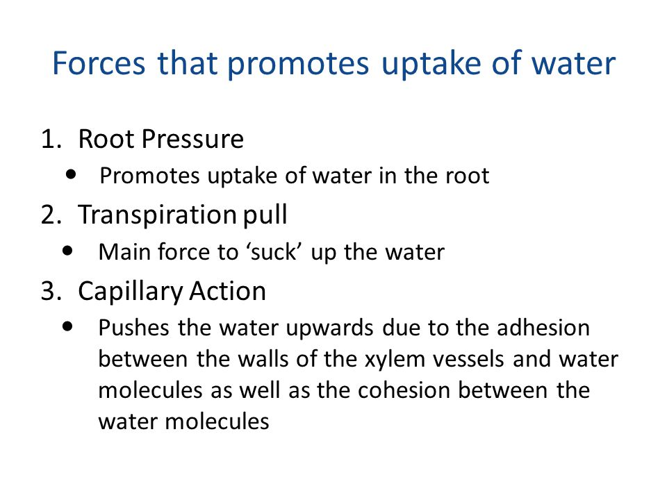 Forces that promotes uptake of water