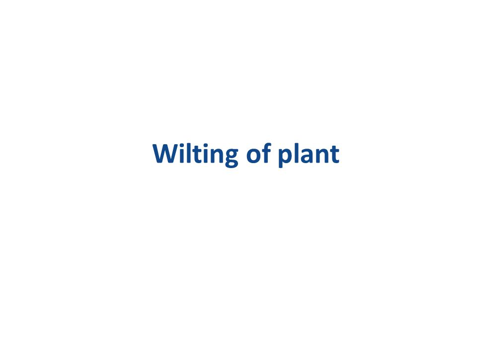 Wilting of plant