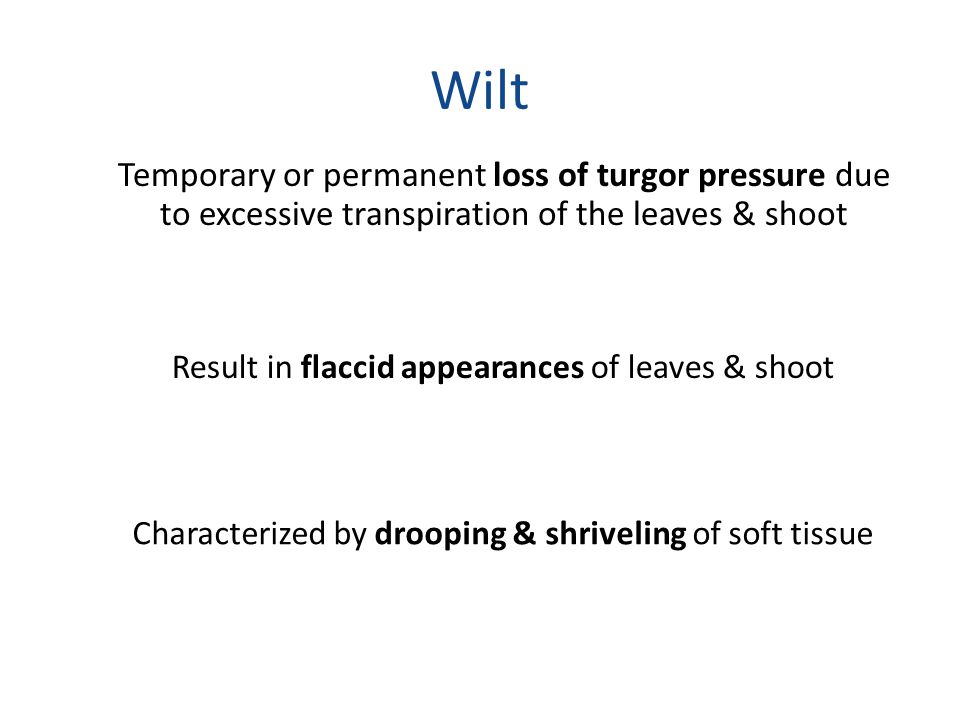 Wilt Temporary or permanent loss of turgor pressure due to excessive transpiration of the leaves & shoot.