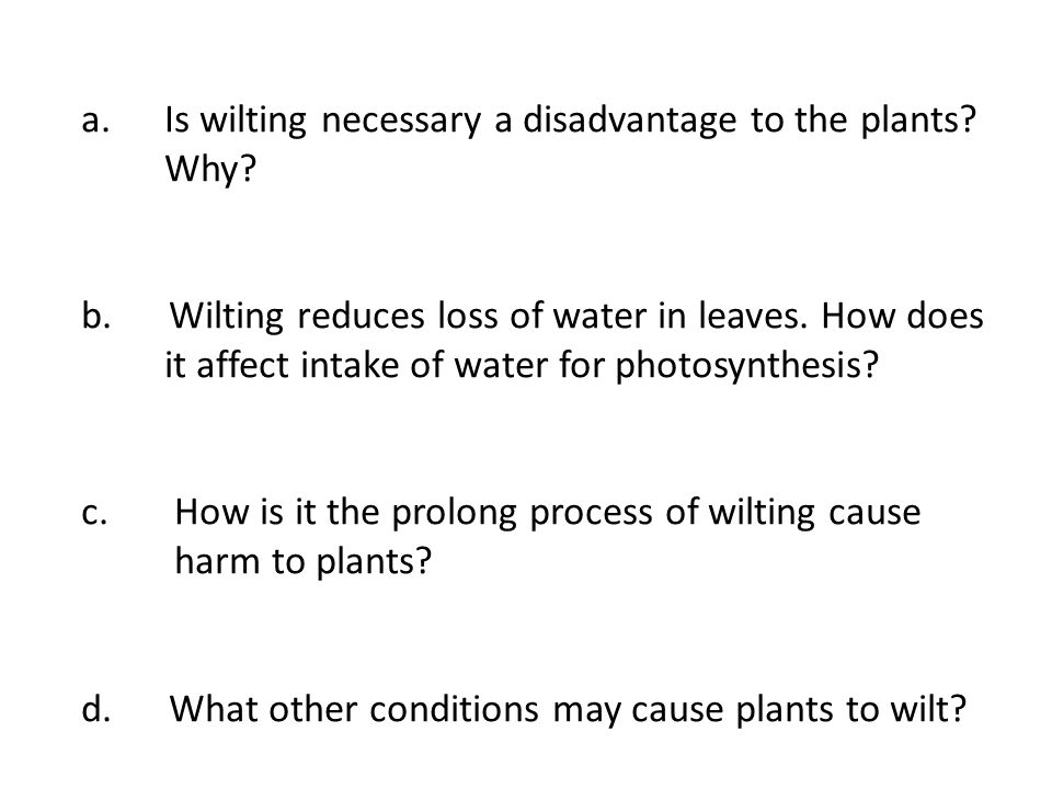 Is wilting necessary a disadvantage to the plants Why