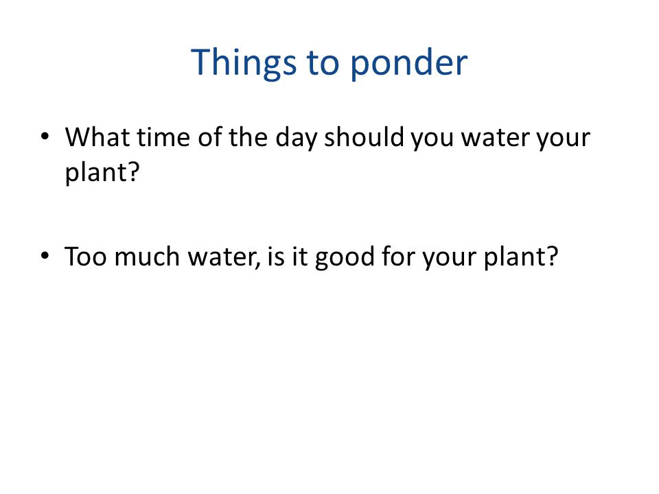 Things to ponder What time of the day should you water your plant