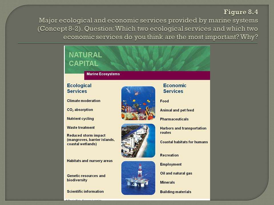 Figure 8.4 Major ecological and economic services provided by marine systems (Concept 8-2).
