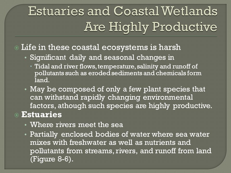 Estuaries and Coastal Wetlands Are Highly Productive