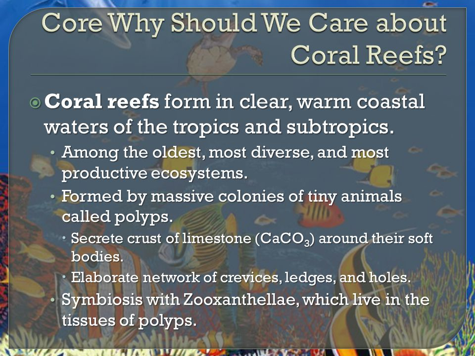 Core Why Should We Care about Coral Reefs