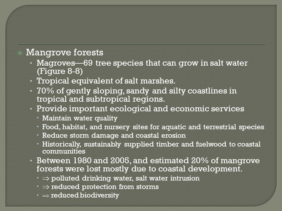 Mangrove forests Magroves—69 tree species that can grow in salt water (Figure 8-8) Tropical equivalent of salt marshes.