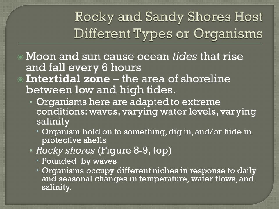 Rocky and Sandy Shores Host Different Types or Organisms