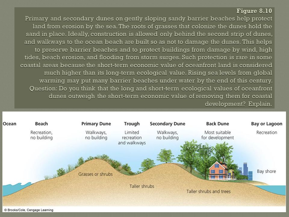 Figure 8.10 Primary and secondary dunes on gently sloping sandy barrier beaches help protect land from erosion by the sea.