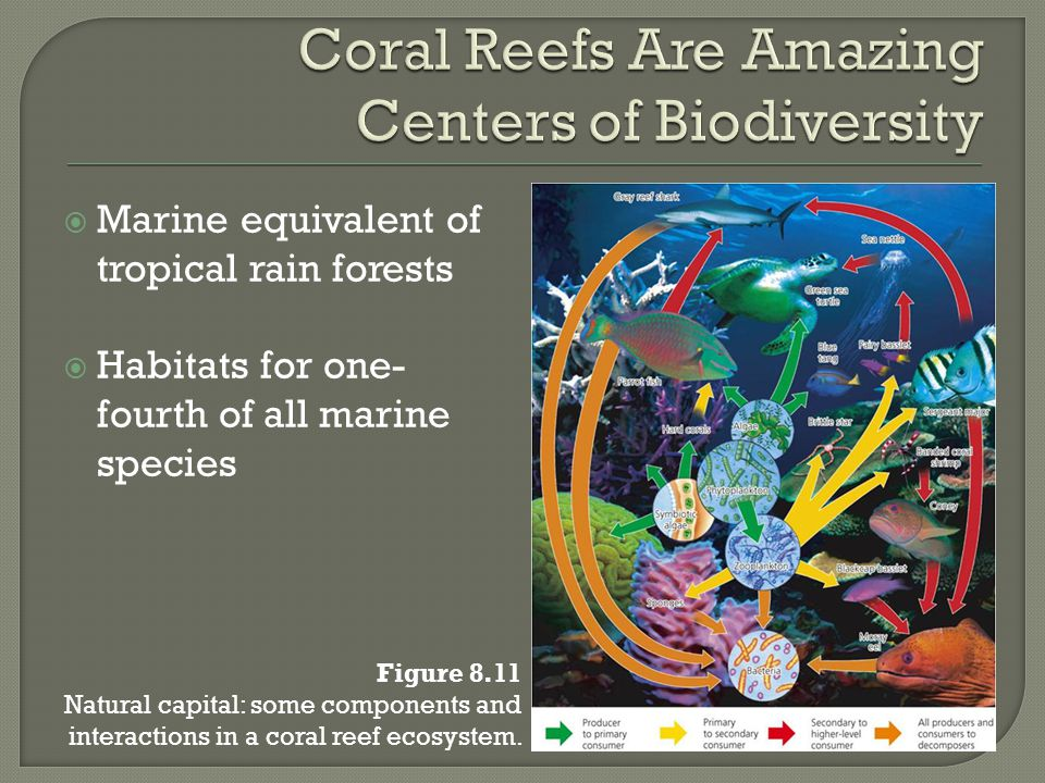 Coral Reefs Are Amazing Centers of Biodiversity