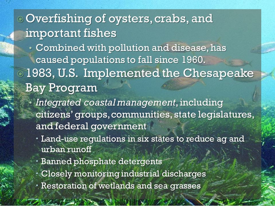 Overfishing of oysters, crabs, and important fishes