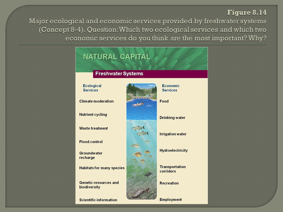 Figure 8.14 Major ecological and economic services provided by freshwater systems (Concept 8-4).