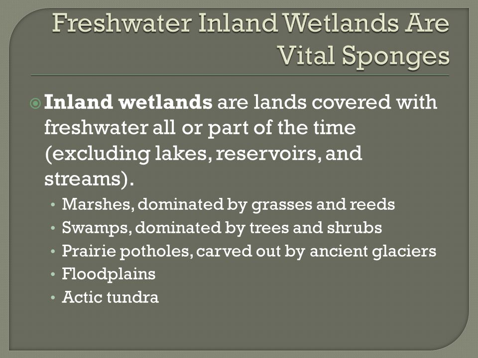Freshwater Inland Wetlands Are Vital Sponges