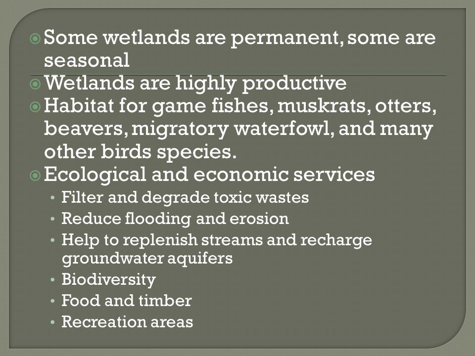 Some wetlands are permanent, some are seasonal