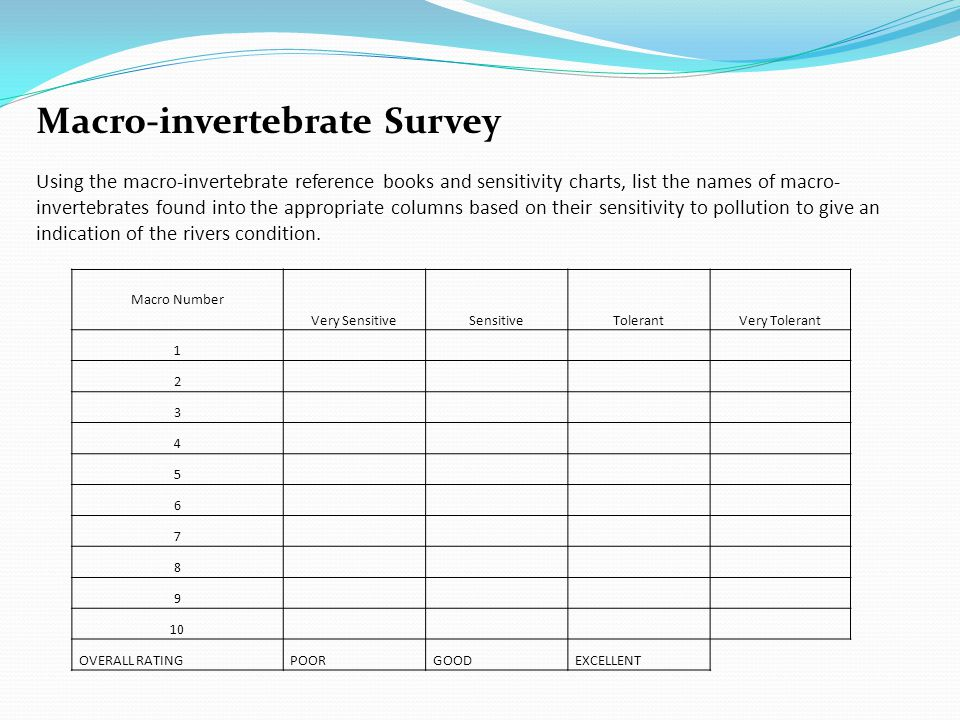 Macro-invertebrate Survey