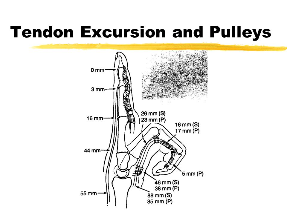 Tendon Excursion and Pulleys