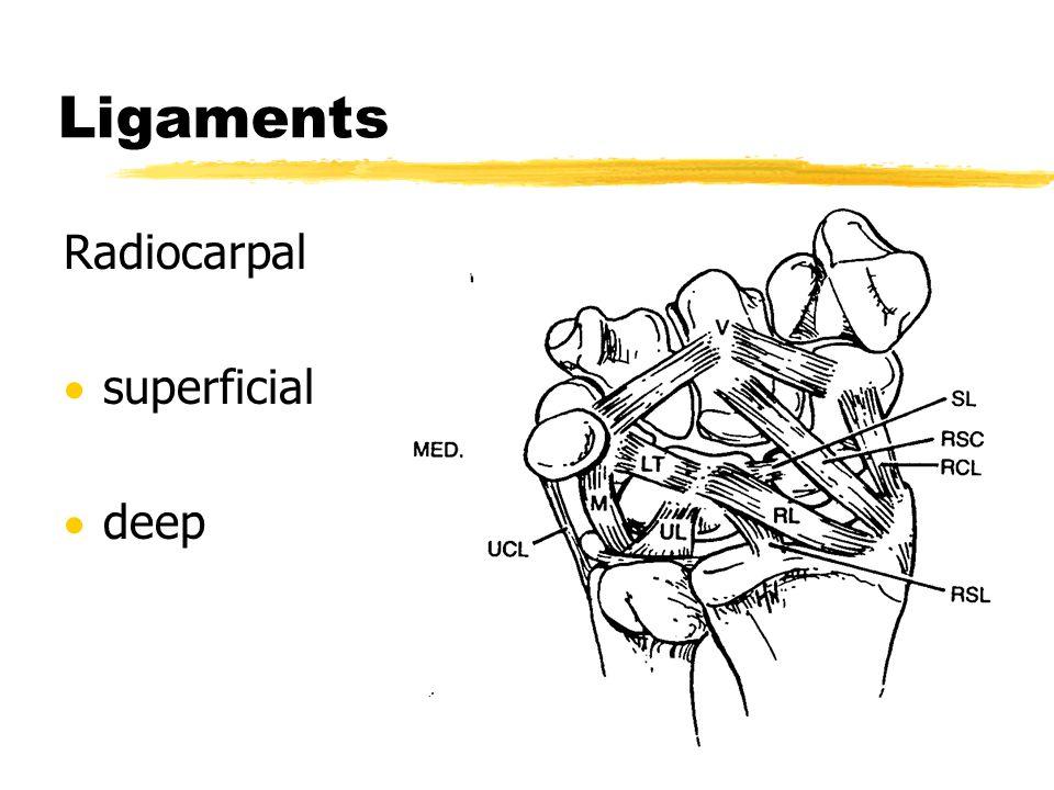 Ligaments Radiocarpal superficial deep