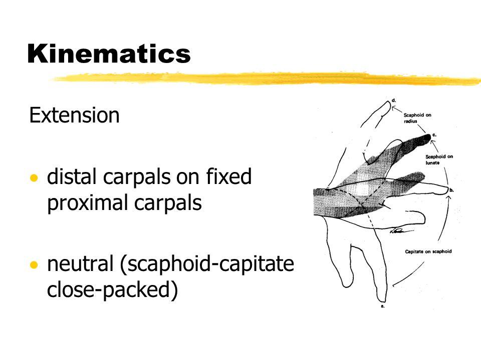 Kinematics Extension distal carpals on fixed proximal carpals