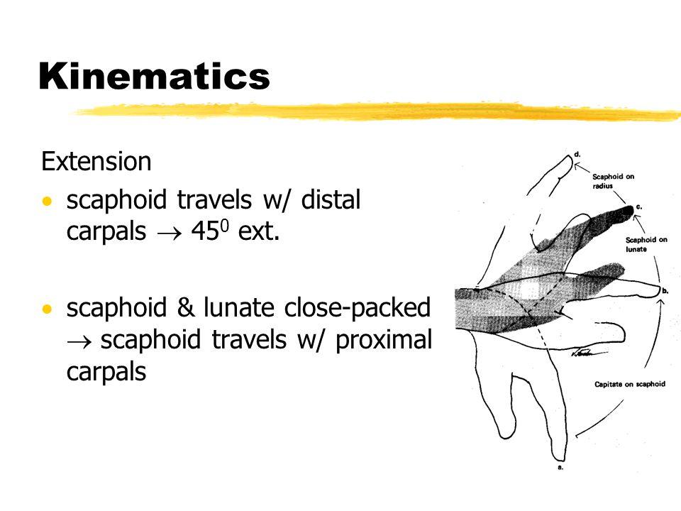 Kinematics Extension scaphoid travels w/ distal carpals  450 ext.