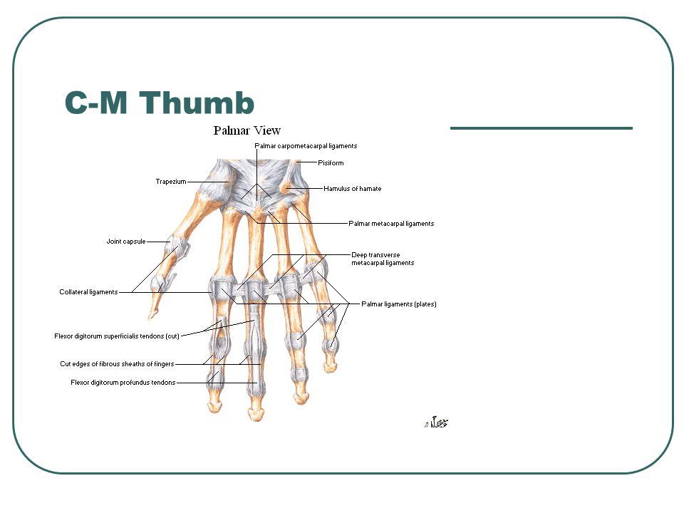 C-M Thumb