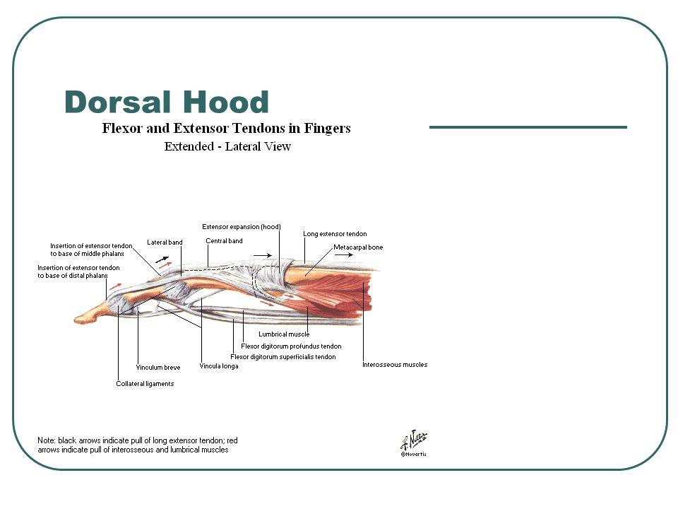 Dorsal Hood