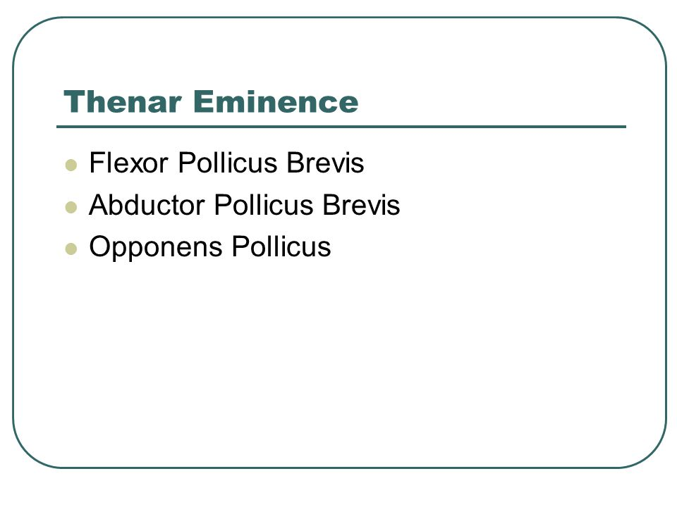 Thenar Eminence Flexor Pollicus Brevis Abductor Pollicus Brevis