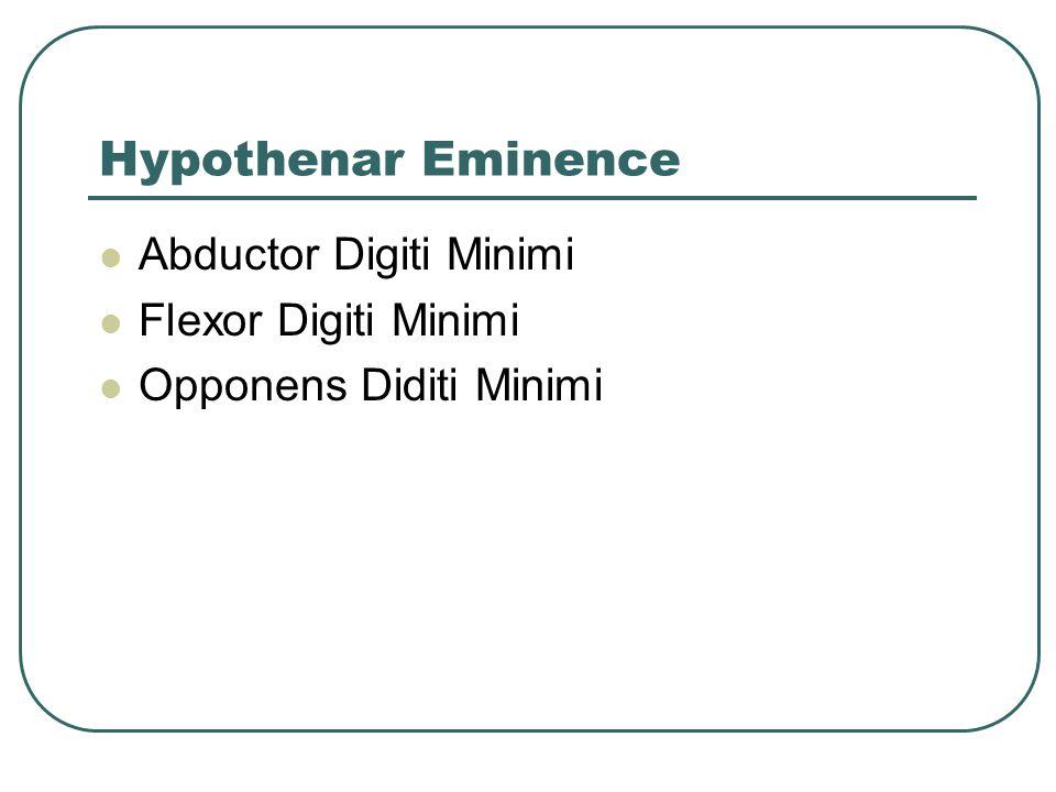 Hypothenar Eminence Abductor Digiti Minimi Flexor Digiti Minimi