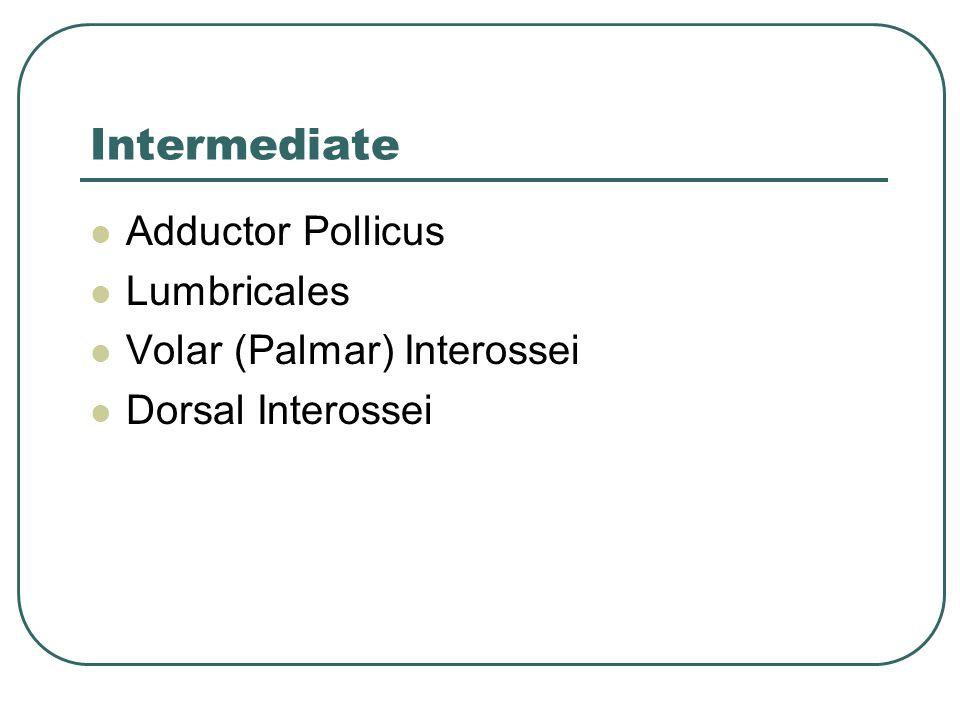 Intermediate Adductor Pollicus Lumbricales Volar (Palmar) Interossei