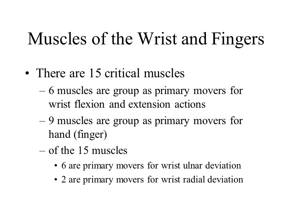 Muscles of the Wrist and Fingers