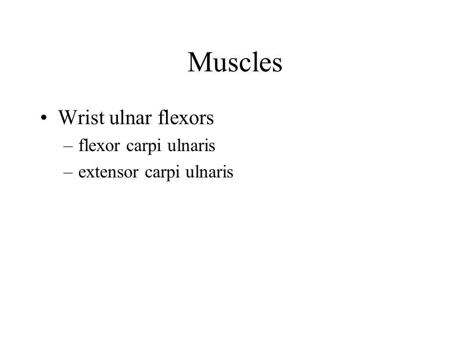 Muscles Wrist ulnar flexors flexor carpi ulnaris