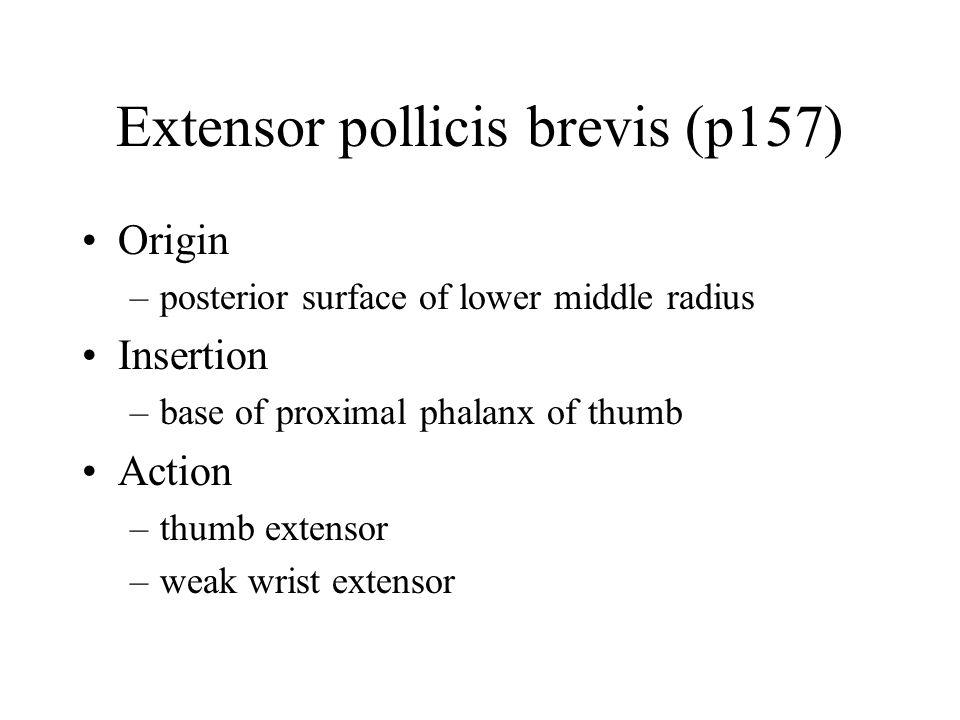 Extensor pollicis brevis (p157)