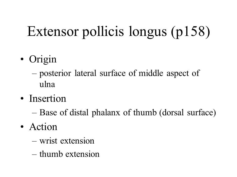 Extensor pollicis longus (p158)