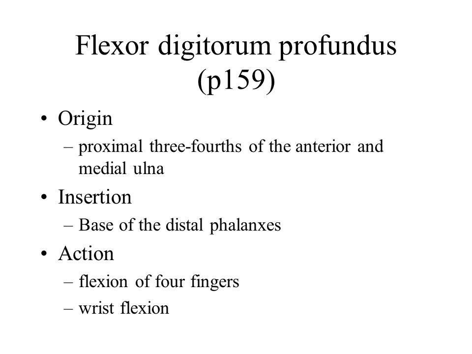 Flexor digitorum profundus (p159)