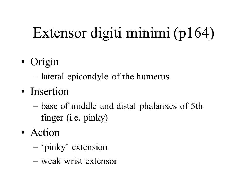 Extensor digiti minimi (p164)
