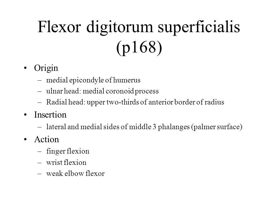 Flexor digitorum superficialis (p168)