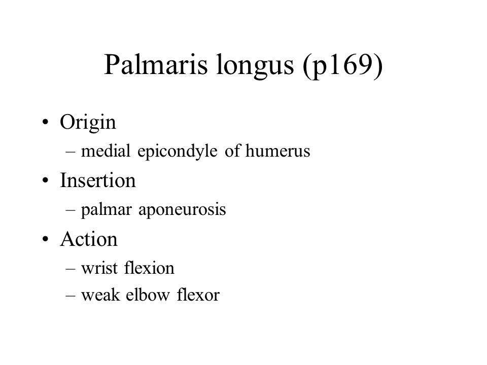 Palmaris longus (p169) Origin Insertion Action