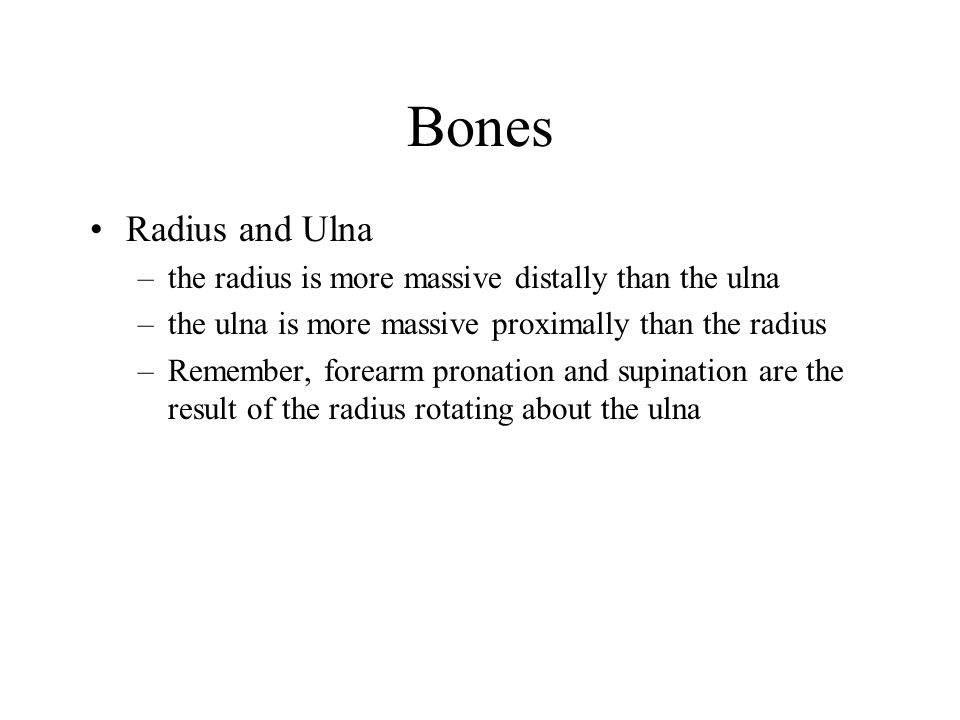 Bones Radius and Ulna. the radius is more massive distally than the ulna. the ulna is more massive proximally than the radius.