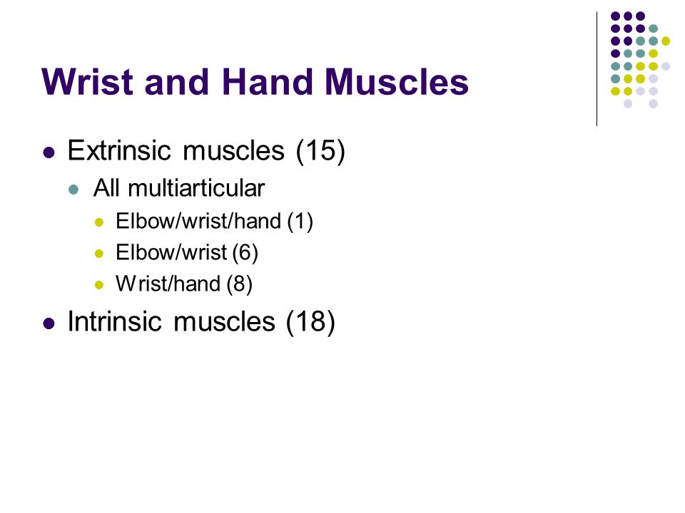 Wrist and Hand Muscles Extrinsic muscles (15) Intrinsic muscles (18)