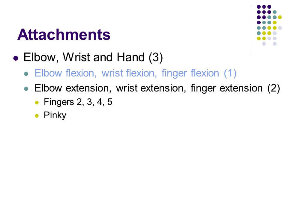 Attachments Elbow, Wrist and Hand (3)