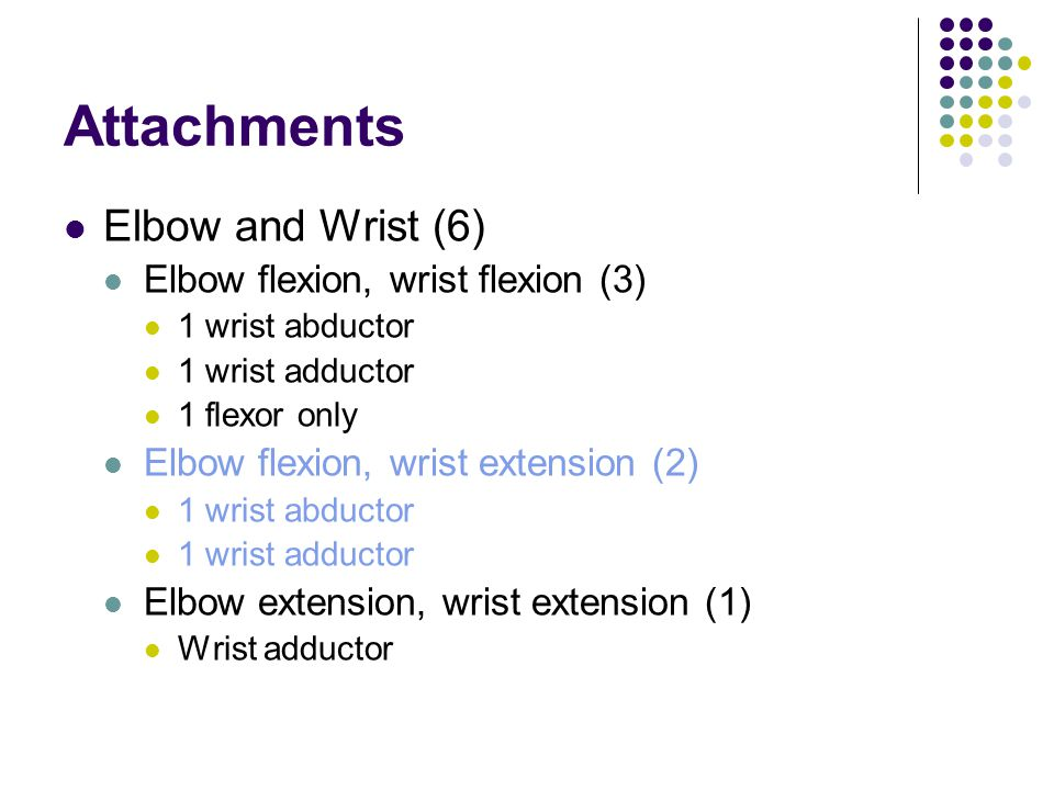 Attachments Elbow and Wrist (6) Elbow flexion, wrist flexion (3)