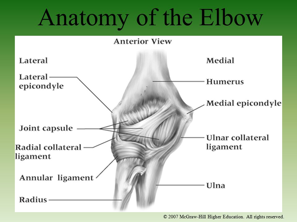Anatomy of the Elbow © 2007 McGraw-Hill Higher Education. All rights reserved.