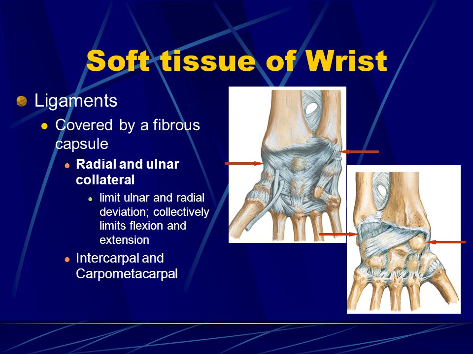 Soft tissue of Wrist Ligaments Covered by a fibrous capsule