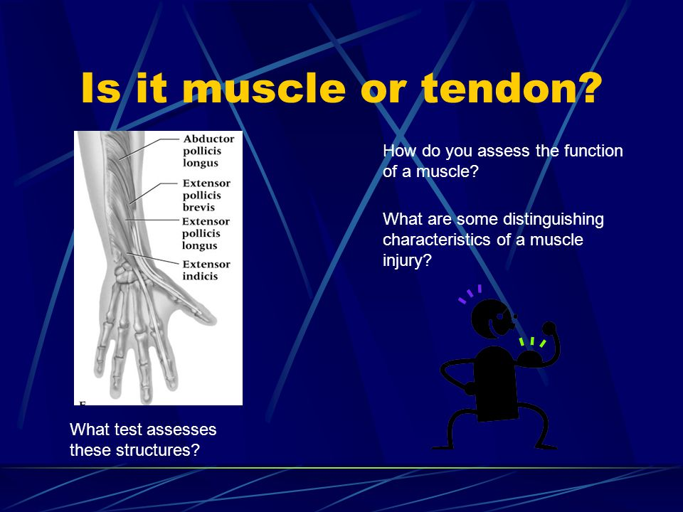 Is it muscle or tendon How do you assess the function of a muscle