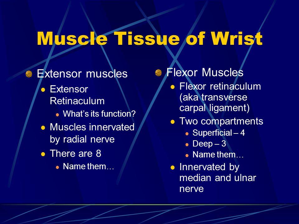 Muscle Tissue of Wrist Extensor muscles Flexor Muscles