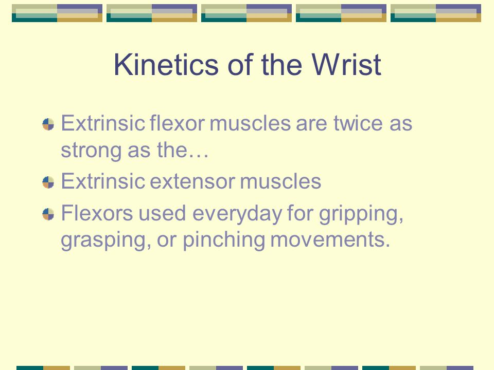 Kinetics of the Wrist Extrinsic flexor muscles are twice as strong as the… Extrinsic extensor muscles.