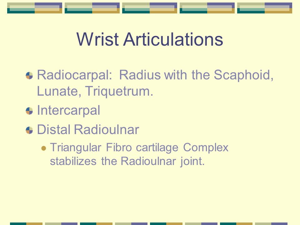 Wrist Articulations Radiocarpal: Radius with the Scaphoid, Lunate, Triquetrum. Intercarpal. Distal Radioulnar.