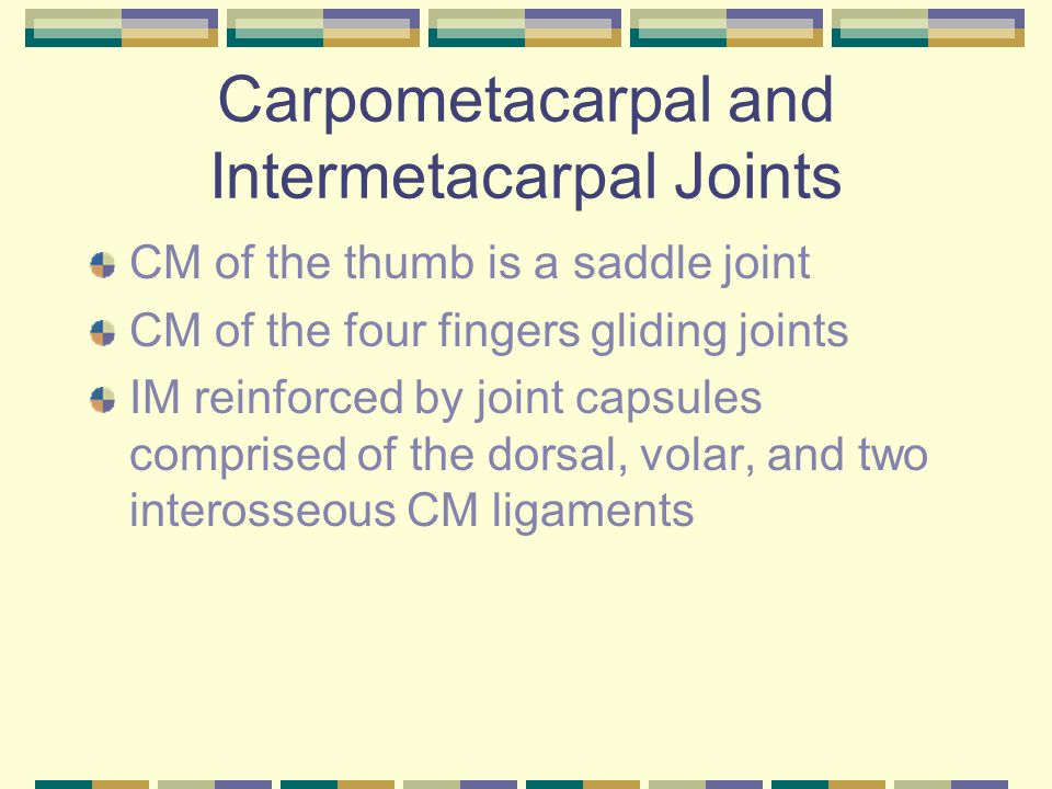 Carpometacarpal and Intermetacarpal Joints
