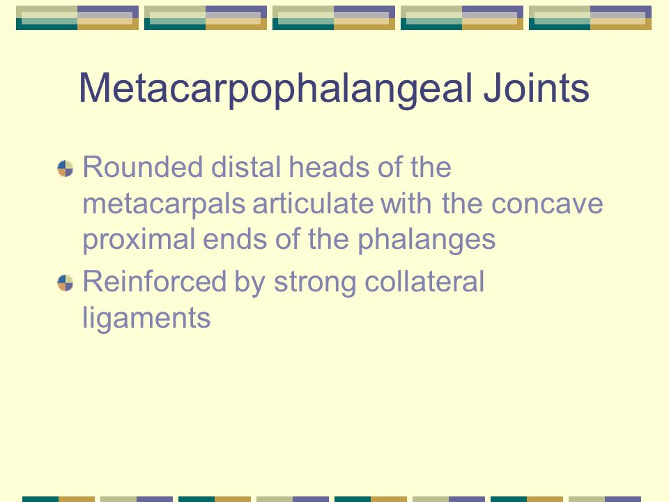 Metacarpophalangeal Joints