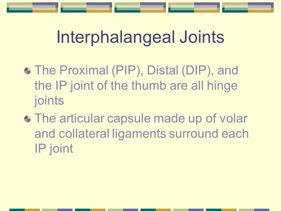 Interphalangeal Joints