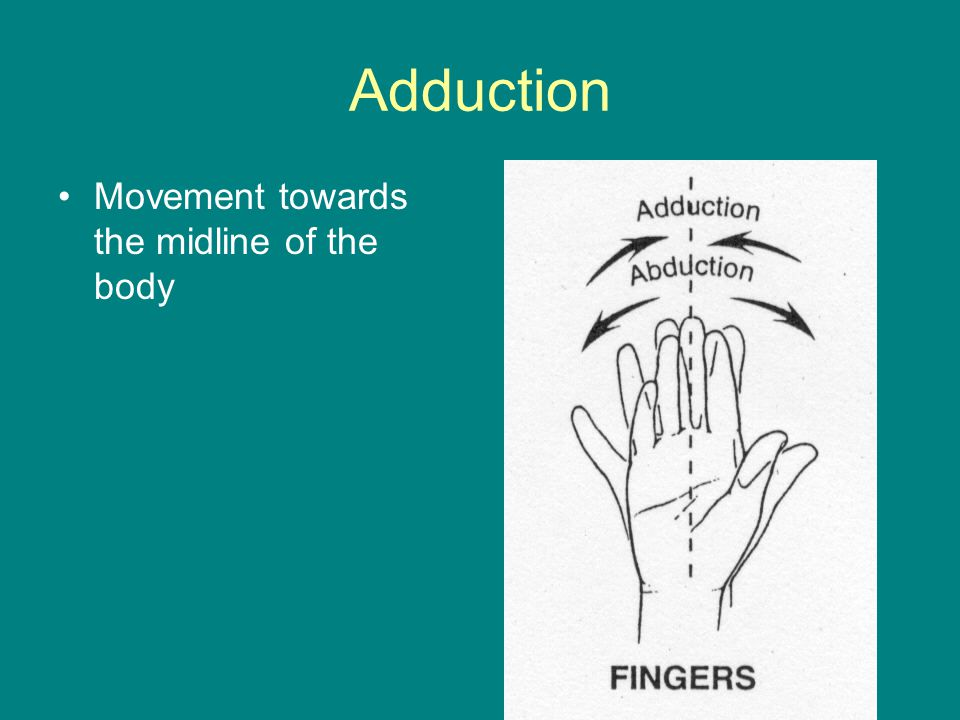 Adduction Movement towards the midline of the body