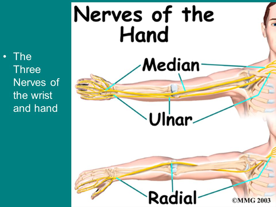 The Three Nerves of the wrist and hand