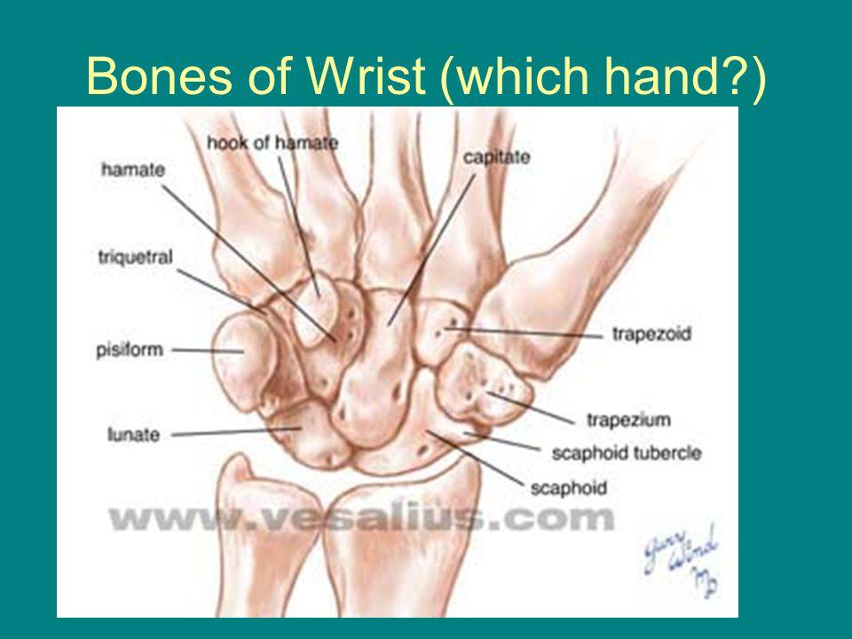 Bones of Wrist (which hand )